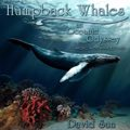 Relaxing Music: 'Humpback Whales (An Oceanic Odyssey)' - Album Cover Image